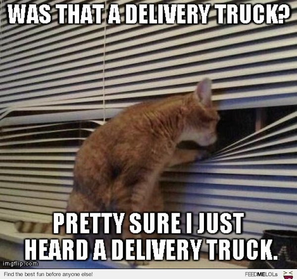 Be clear when the package will arrive, for the cat's sake